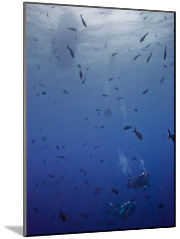 Divers Descend Through Schools of Fish to Reach the Reef Below-Ben Horton-Mounted Photographic Print
