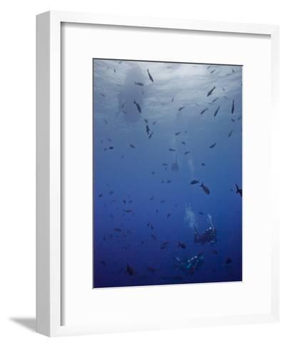 Divers Descend Through Schools of Fish to Reach the Reef Below-Ben Horton-Framed Art Print