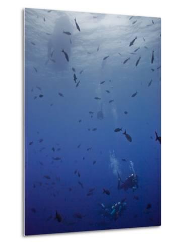 Divers Descend Through Schools of Fish to Reach the Reef Below-Ben Horton-Metal Print
