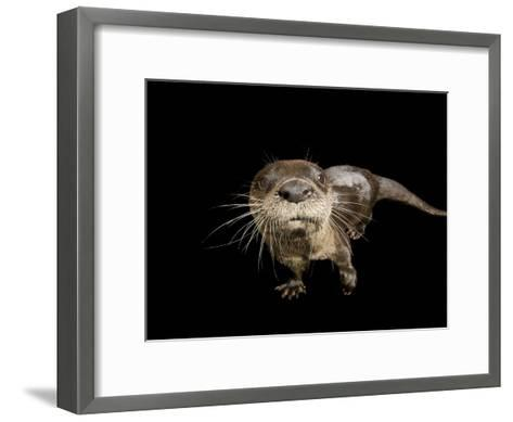 River Otter, Lontra Canadensis-Joel Sartore-Framed Art Print