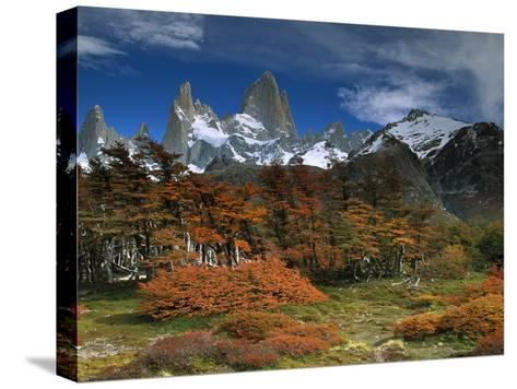 Mount Fitzroy and Lenga Beech (Nothofagus Pumilio) Trees, Los Glaciares National Park, Argentina-Colin Monteath/Minden Pictures-Stretched Canvas Print