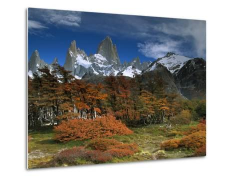Mount Fitzroy and Lenga Beech (Nothofagus Pumilio) Trees, Los Glaciares National Park, Argentina-Colin Monteath/Minden Pictures-Metal Print