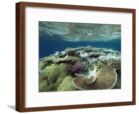 Great Barrier Reef Near Port Douglas, Queensland, Australia-Flip Nicklin/Minden Pictures-Framed Art Print