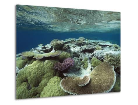 Great Barrier Reef Near Port Douglas, Queensland, Australia-Flip Nicklin/Minden Pictures-Metal Print