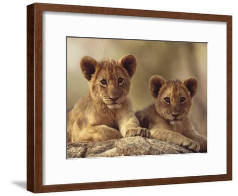 African Lion (Panthera Leo) Cubs Resting on a Rock, Hwange National Park, Zimbabwe, Africa-Tim Fitzharris/Minden Pictures-Framed Art Print