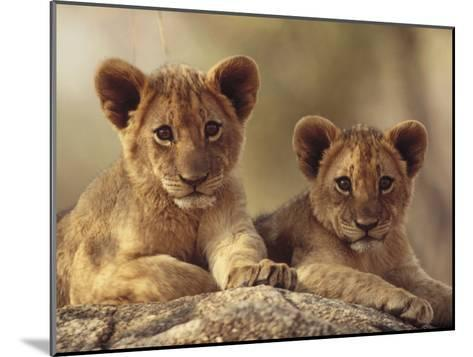 African Lion (Panthera Leo) Cubs Resting on a Rock, Hwange National Park, Zimbabwe, Africa-Tim Fitzharris/Minden Pictures-Mounted Photographic Print