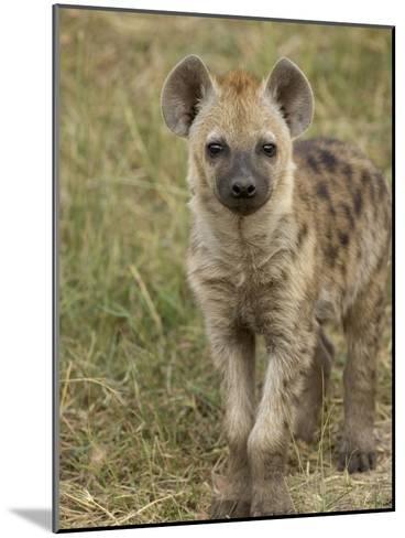 Spotted Hyena (Crocuta Crocuta) Portrait, Masai Mara Reserve, Kenya-Suzi Eszterhas/Minden Pictures-Mounted Photographic Print