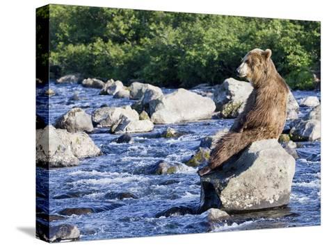 Brown Bear (Ursus Arctos) Sitting on Rock in River, Kamchatka, Russia-Sergey Gorshkov/Minden Pictures-Stretched Canvas Print