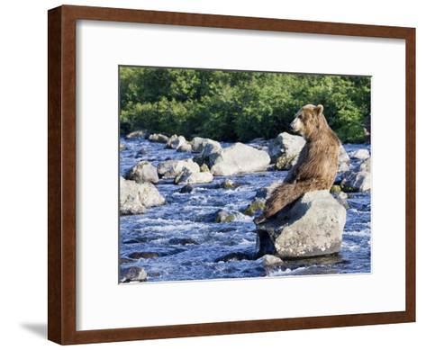 Brown Bear (Ursus Arctos) Sitting on Rock in River, Kamchatka, Russia-Sergey Gorshkov/Minden Pictures-Framed Art Print