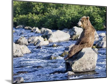 Brown Bear (Ursus Arctos) Sitting on Rock in River, Kamchatka, Russia-Sergey Gorshkov/Minden Pictures-Mounted Photographic Print