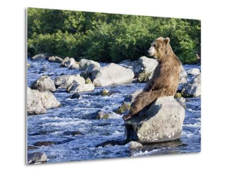 Brown Bear (Ursus Arctos) Sitting on Rock in River, Kamchatka, Russia-Sergey Gorshkov/Minden Pictures-Metal Print
