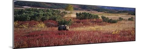 Brown Bear (Ursus Arctos) Kamchatka, Russia-Sergey Gorshkov/Minden Pictures-Mounted Photographic Print