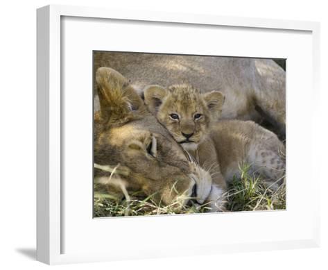African Lion (Panthera Leo) Mother Resting with Cub, Vulnerable, Masai Mara Nat'l Reserve, Kenya-Suzi Eszterhas/Minden Pictures-Framed Art Print