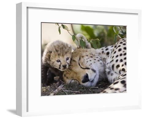 Cheetah (Acinonyx Jubatus) Mother and Seven Day Old Cub, Maasai Mara Reserve, Kenya-Suzi Eszterhas/Minden Pictures-Framed Art Print