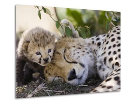 Cheetah (Acinonyx Jubatus) Mother and Seven Day Old Cub, Maasai Mara Reserve, Kenya-Suzi Eszterhas/Minden Pictures-Metal Print
