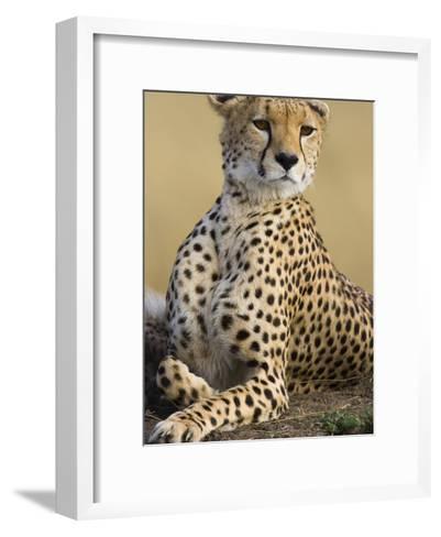 Cheetah (Acinonyx Jubatus) Adult Female Portait, Maasai Mara Reserve, Kenya-Suzi Eszterhas/Minden Pictures-Framed Art Print