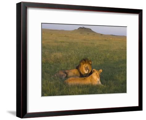 African Lion (Panthera Leo) Male and Female, Masai Mara, Kenya-Suzi Eszterhas/Minden Pictures-Framed Art Print
