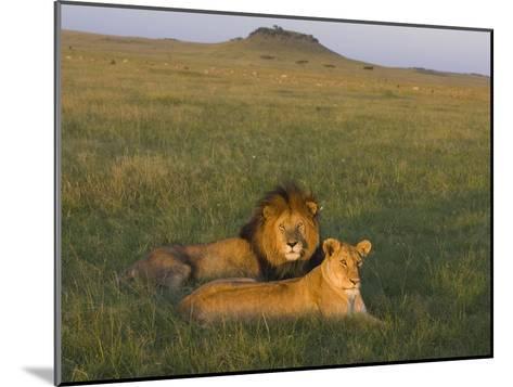 African Lion (Panthera Leo) Male and Female, Masai Mara, Kenya-Suzi Eszterhas/Minden Pictures-Mounted Photographic Print