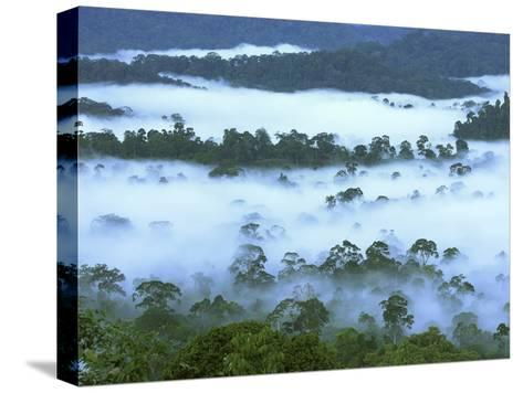 Canopy of Lowland Rainforest at Dawn with Fog, Danum Valley Conservation Area, Borneo, Malaysia-Thomas Marent/Minden Pictures-Stretched Canvas Print