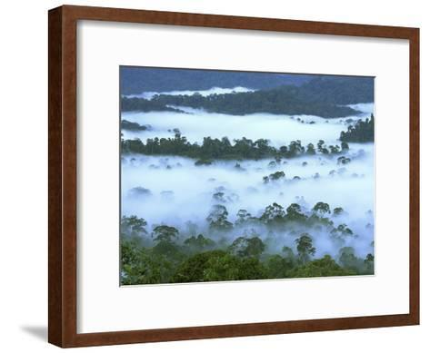 Canopy of Lowland Rainforest at Dawn with Fog, Danum Valley Conservation Area, Borneo, Malaysia-Thomas Marent/Minden Pictures-Framed Art Print