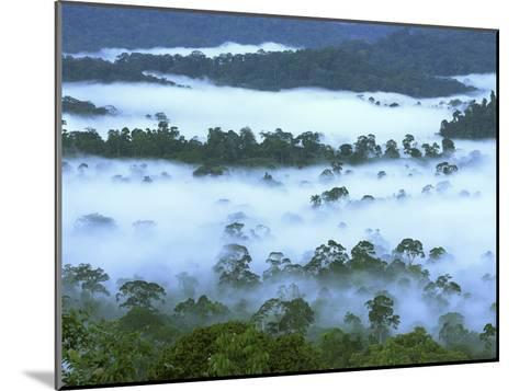 Canopy of Lowland Rainforest at Dawn with Fog, Danum Valley Conservation Area, Borneo, Malaysia-Thomas Marent/Minden Pictures-Mounted Photographic Print