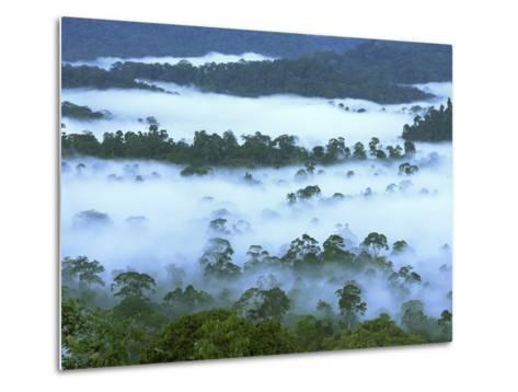 Canopy of Lowland Rainforest at Dawn with Fog, Danum Valley Conservation Area, Borneo, Malaysia-Thomas Marent/Minden Pictures-Metal Print