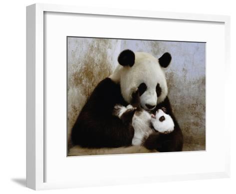 Giant Panda (Ailuropoda Melanoleuca) Caring for Cub, Wolong Nature Reserve, China-Katherine Feng-Framed Art Print