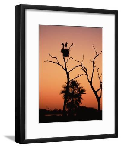 Jabiru Stork (Jabiru Mycteria) Couple at Nest, Sunset, Pantanal, Brazil-Konrad Wothe-Framed Art Print
