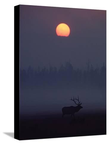 Elk or Wapiti (Cervus Elaphus) Silhouetted on Smoky Horizon, Yellowstone, Wyoming-Michael S^ Quinton-Stretched Canvas Print