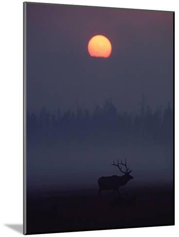 Elk or Wapiti (Cervus Elaphus) Silhouetted on Smoky Horizon, Yellowstone, Wyoming-Michael S^ Quinton-Mounted Photographic Print