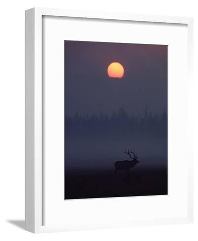 Elk or Wapiti (Cervus Elaphus) Silhouetted on Smoky Horizon, Yellowstone, Wyoming-Michael S^ Quinton-Framed Art Print