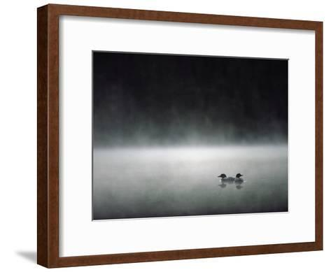 Common Loon (Gavia Immer) Mated Couple on a Misty Lake, Wyoming-Michael S^ Quinton-Framed Art Print