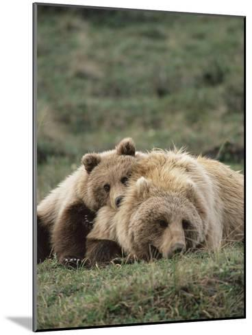 Alaskan Brown Bear or Grizzly Bear (Ursus Arctos) Mother and Cub Resting, Denali , Alaska-Michael S^ Quinton-Mounted Photographic Print