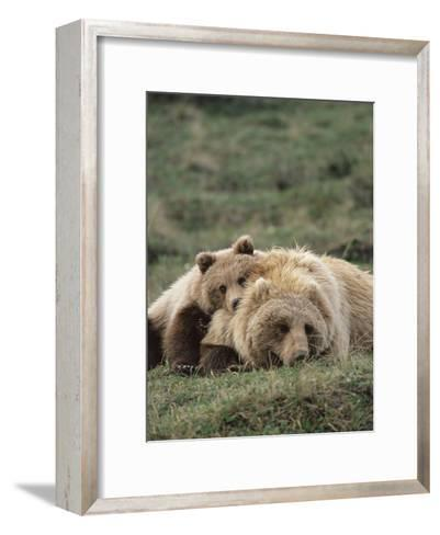 Alaskan Brown Bear or Grizzly Bear (Ursus Arctos) Mother and Cub Resting, Denali , Alaska-Michael S^ Quinton-Framed Art Print