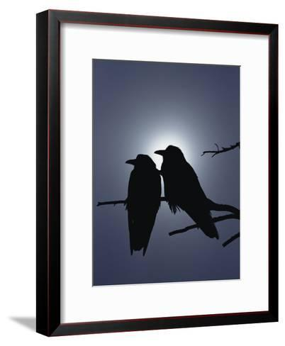 Raven (Corvus Corax) Pair Perching on a Branch, Backlit by Filtered Sunlight-Michael S^ Quinton-Framed Art Print