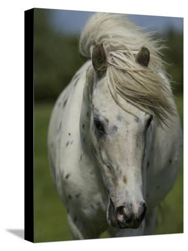 Portrait of a Horse-Joe Petersburger-Stretched Canvas Print