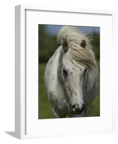 Portrait of a Horse-Joe Petersburger-Framed Art Print