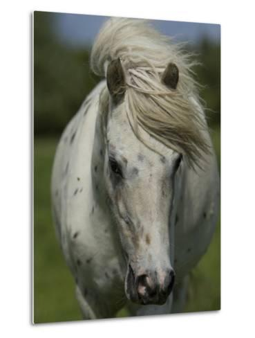 Portrait of a Horse-Joe Petersburger-Metal Print