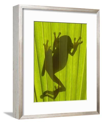 Chachi Tree Frog (Hyla Picturata) Silhouette, Choco Rainforest, Ecuador-Pete Oxford-Framed Art Print