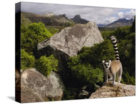 Ring-Tailed Lemur (Lemur Catta), Overlooking the Andringitra Mountains, Madagascar-Pete Oxford-Stretched Canvas Print