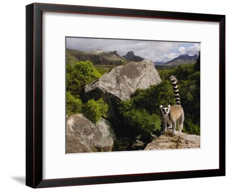 Ring-Tailed Lemur (Lemur Catta), Overlooking the Andringitra Mountains, Madagascar-Pete Oxford-Framed Art Print