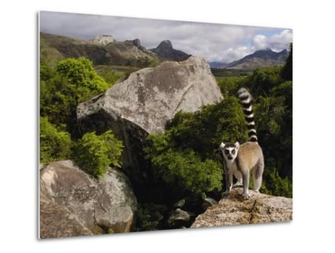 Ring-Tailed Lemur (Lemur Catta), Overlooking the Andringitra Mountains, Madagascar-Pete Oxford-Metal Print