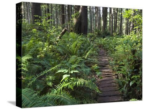 Boardwalk Winds Through the Forest, Olympic National Park, Washington-Konrad Wothe-Stretched Canvas Print