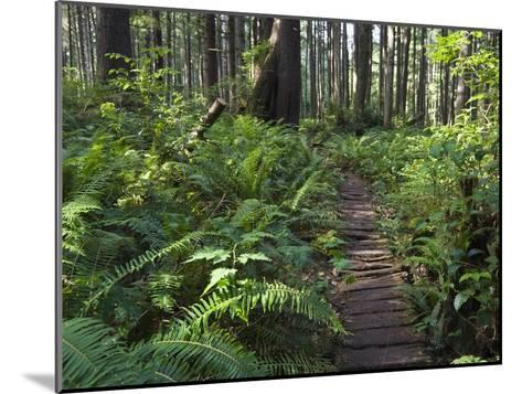 Boardwalk Winds Through the Forest, Olympic National Park, Washington-Konrad Wothe-Mounted Photographic Print