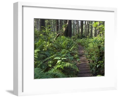 Boardwalk Winds Through the Forest, Olympic National Park, Washington-Konrad Wothe-Framed Art Print