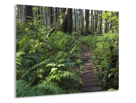 Boardwalk Winds Through the Forest, Olympic National Park, Washington-Konrad Wothe-Metal Print