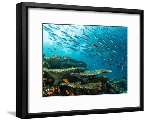 Schooling Fish over a Tropical Coral Reef-Mauricio Handler-Framed Art Print