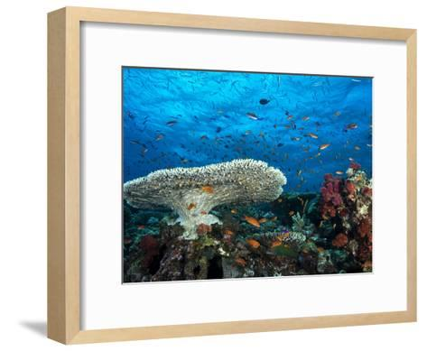 A Pristine Coral Reef Scene Off the Coast of Viti Levu Island-Mauricio Handler-Framed Art Print