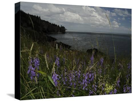 Cliffs and Flowers in the Bay of Fundy Area in Cape Breton-Karen Kasmauski-Stretched Canvas Print