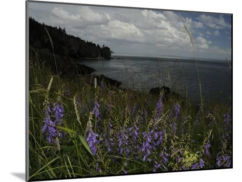 Cliffs and Flowers in the Bay of Fundy Area in Cape Breton-Karen Kasmauski-Mounted Photographic Print